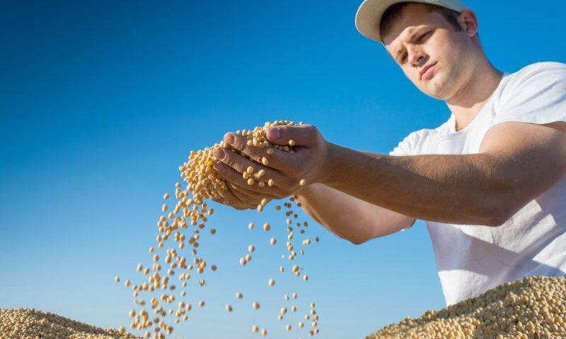 Plantio da safrinha de soja será proibido no Paraná a partir de 2017