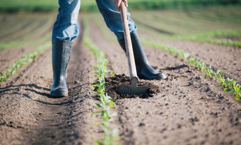 Quais são os dados relevantes na análise de amostragem do solo